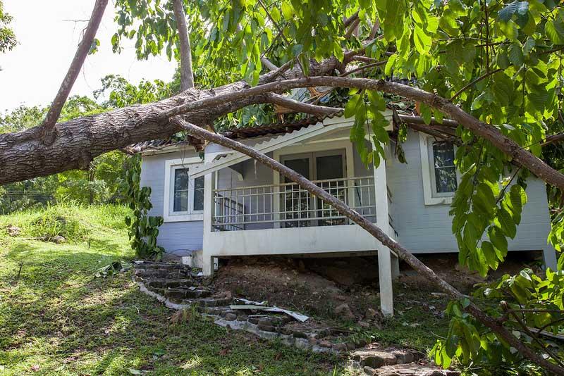 Roof Damage Tree Fell in Storm