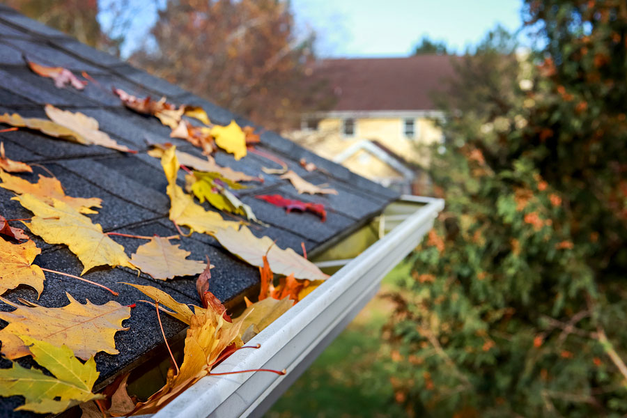 Leaves in Gutter with Shingled Roof