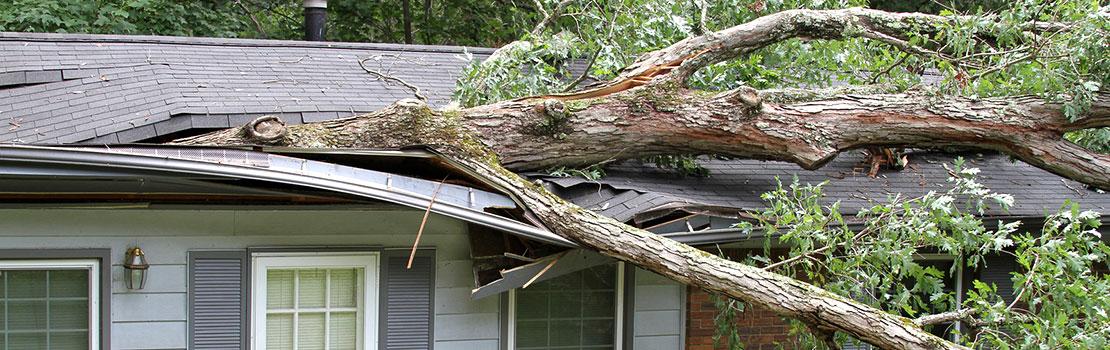 Tree Damaged Roof